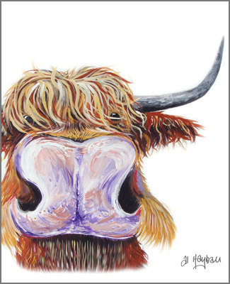 highland cattle, west highland cattle,