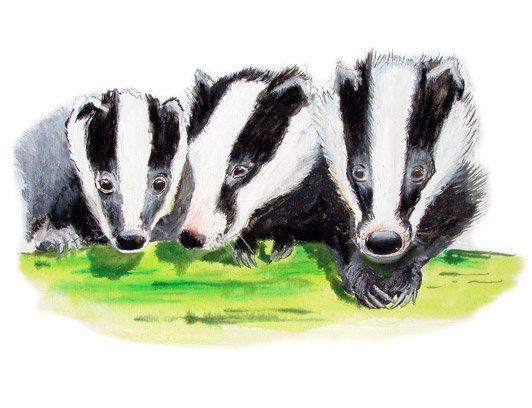 baby badgers, badger art by al hayball,