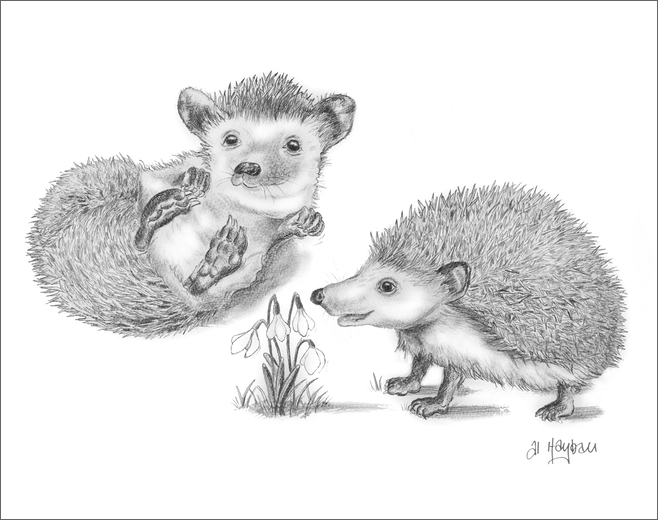 hedgehogs, snowdrop, wake up, spring is here!