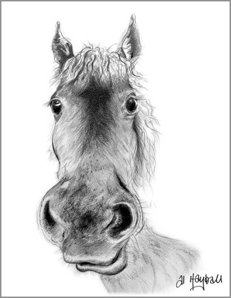 Tasells the horse, Pencil study of horse, by al hayball,